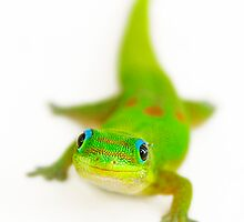 Say cheese!  (Smiling gecko) by Yves Rubin