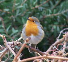 a chistmas robin.... by Lucan  Netley (LDN Photoart)