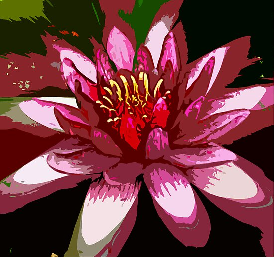 Pink Waterlilly close by Marilyn Baldey