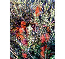 a brush with orange... Photographic Print