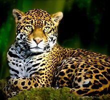 Jaguar by erbephoto