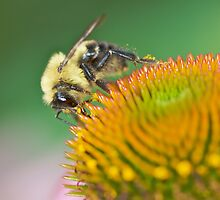The Pollinator by erbephoto