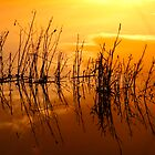Reeds in the floodwater at last light by SWEEPER
