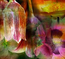 Floral Montage Series 2 by Amanda White