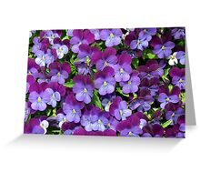 Miniature pansies Greeting Card