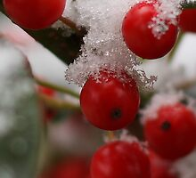 Holly Berries on Ice Too by kevimages