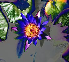 Purple Waterlilly, metalic shadow by Marilyn Baldey
