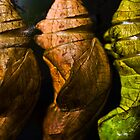 Chrysalises by Steven David Johnson