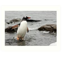 "Gentoo Penguin ~ ""Gawd it's Cold"" Art Print"