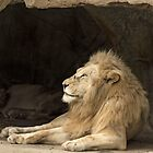 Lion by Kym Bradley