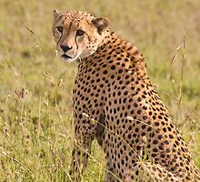 Safari by Nickolay Stanev