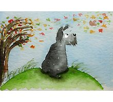 Scottie Dog 'Windy Day' Photographic Print
