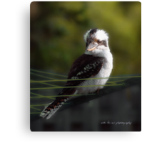 Kookaburra Hoists on the Hills © Vicki Ferrari Photography Canvas Print