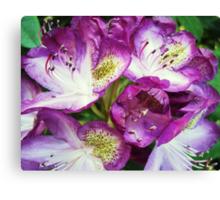 Rhododendron Sensation Canvas Print