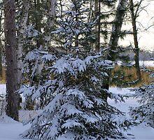 Christmas Tree by babyangel