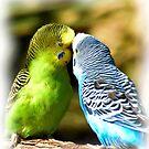 Is it not LOVE! by Dennis Stewart
