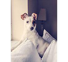 Doggy portrait Photographic Print