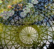 Dome reflection, Mt Coothha botanic gardens, Brisbane, Qld. Australia by Marilyn Baldey