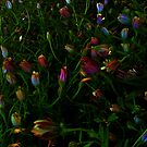 my garden 4 by Colleen Milburn