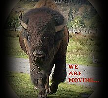 Bison Animal We Are Moving.... Card by Jonice