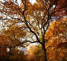 The beauty of Burnham Beeches by Donncha O Caoimh