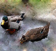 Ducks on Ice (III) by Laurie Puglia