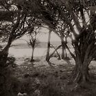 Ti trees Rottnest two by Andrew  Makowiecki
