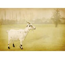 Year of the Goat Photographic Print