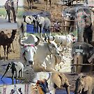 Montage - Animals of Africa and India by cascoly