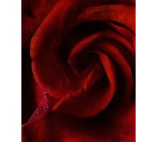 Rose Drama Photographic Print