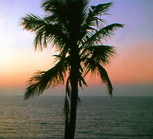 'Palm Tree...' by Scott Bricker