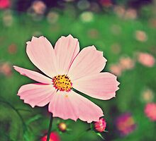 Pink Cosmos 4 (with texture) by liyafendi