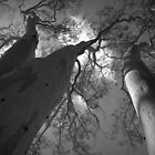 Scary Trees- Moores Road by Ben Loveday