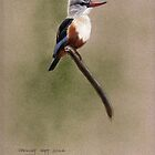 African Grey Headed Kingfisher by Philip Holley
