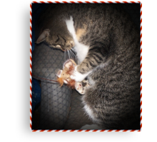 Bootsie And Her Christmas Toy Canvas Print