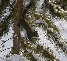 Our crazy squirrel by Jeanne Frasse