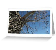 Blue Skies 024 Greeting Card