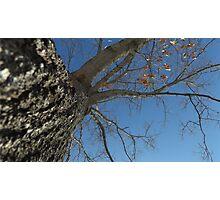 Blue Skies 024 Photographic Print