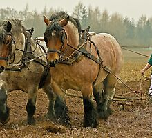 Real Horse-Power at Work! by Lars Klottrup