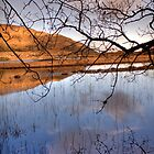 Killarney National Park - 'Watery Meadow' by highonsnow