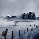 Brown Horse on a Blue Farm by Wayne King