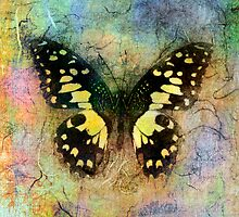 Yellow Butterfly by Antaratma Images