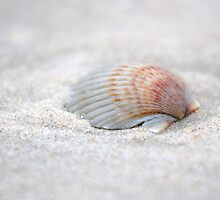 i got another seashell for you by Alexandr Grichenko