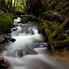 A Creek Somewhere. by Mark Jones