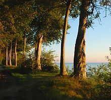 Beechtrees at the Baltic Sea by jchanders