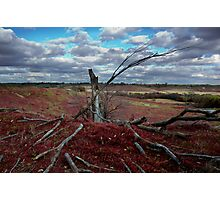 Red Grass Hill Photographic Print