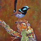 &#x27;Superb Fairy Wren&#x27; by Helen Miles