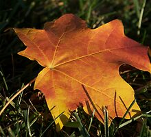 Gold Leaf Subsiding by MCinKC