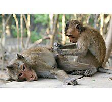 Monkey Island Pals Photographic Print
