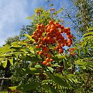 Invermoriston Berries by kalaryder